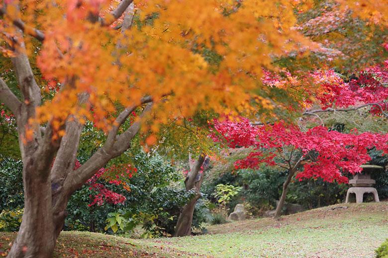 三渓園の中庭