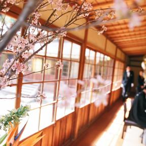 桜の季節の三渓園で結婚式
