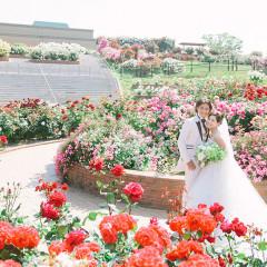 バラの花言葉「愛」「美」