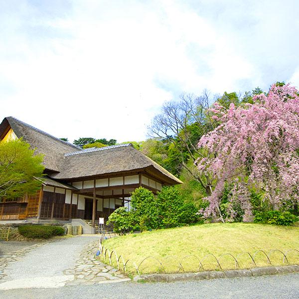 2018年4月桜満喫プラン