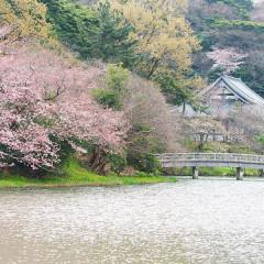 2019年4月予約開始【桜の季節】